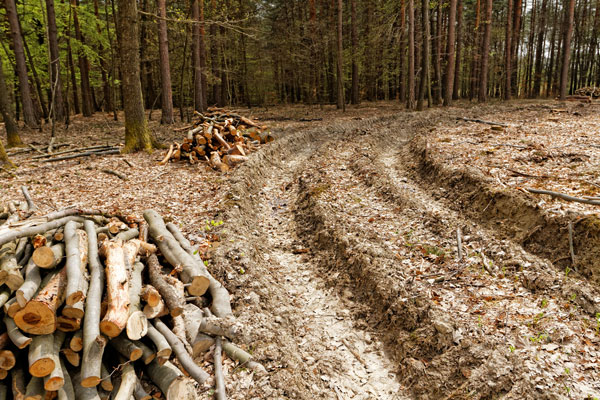 workers' compensation for logging workers